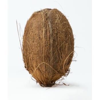 DOJRZAŁY KOKOS BIO (około 0,50 kg) - GEN UINE COCONUT